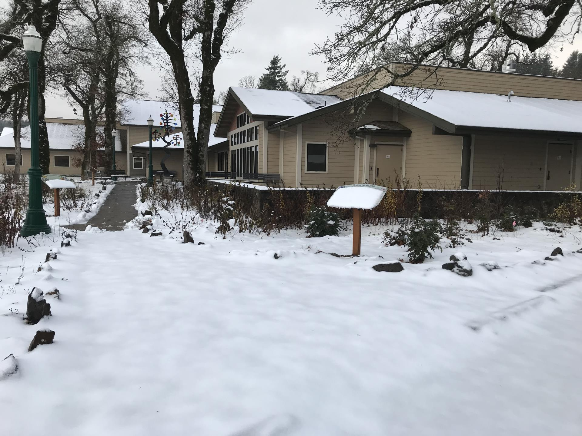 garden under blanket of snow Dec 2019